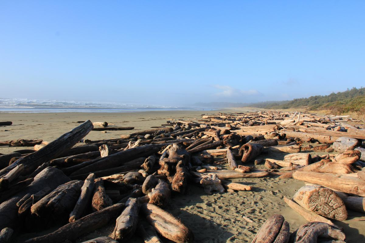 Click image for larger version.  Name:Beach Walk Dec 20 2011 002.jpg Views:99 Size:127.9 KB ID:190090